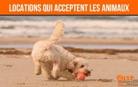 LOCATIONS DE VACANCES QUI ACCEPTENT LES ANIMAUX
