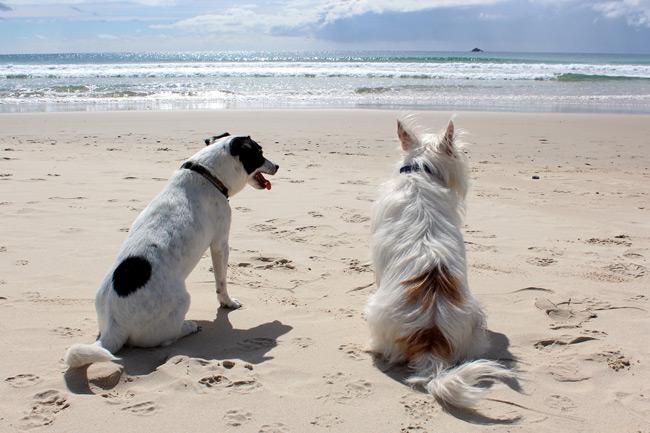Partir en vacance avec mon chien
